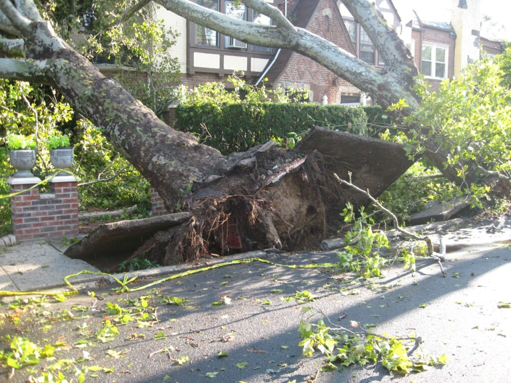 Severe weather can cause downed trees and other property damage.